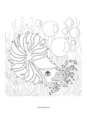 Shell Fish Dot To Dot Puzzle
